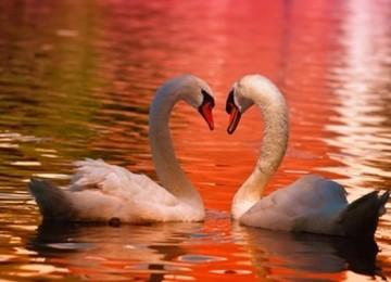 בחירת בני זוג – 5 התכונות העקריות שאנחנו מחפשים בחיפוש אחר בני זוג